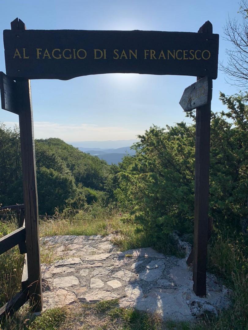 Il faggio di San Francesco