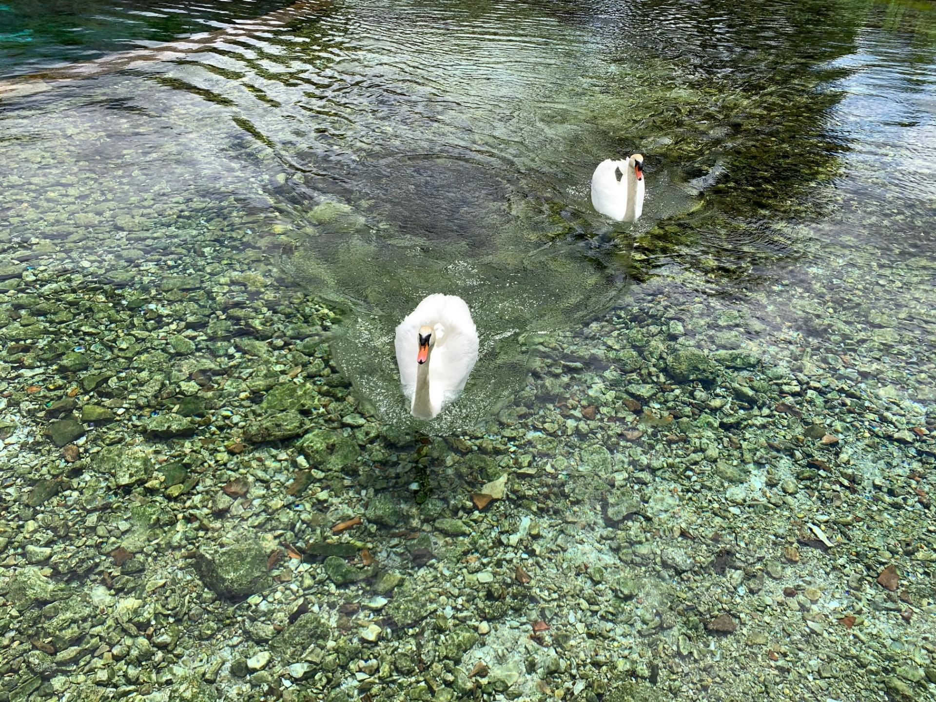 Le sorgenti di Santa Susanna